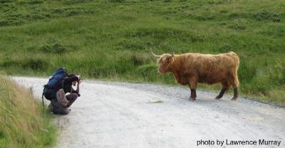 HIghland Showdown, longhorn bull, photo by Lawrence Murray