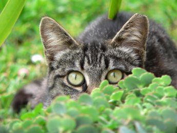 Shy, photo by Kaibara87