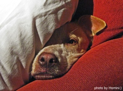 Stubborn dog, photo by Homini