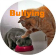 orange tabby bullying grey cat