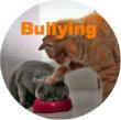 orange tabby bullying grey cat