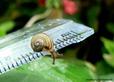 tiny snail on rule, too tiny to measure by Memotions