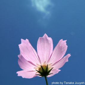 Flower, photo by Tanaka Juuyoh