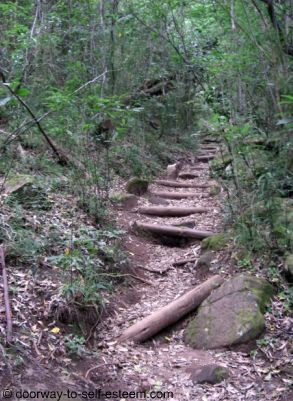 Forest path - Cecilia Forest, Cape Town