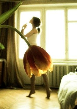 tulip tutu - did you take this photo?